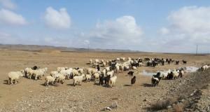 Lives Clinging On Livestock