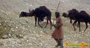 Drought in Balochistan