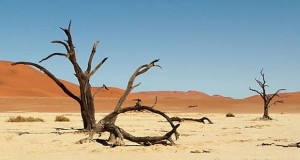 Balochistan: A Catastrophe In Form Of Famine Is Expected