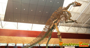 Zhucheng: Home to World's Largest Concentration of Dinosaur Fossils