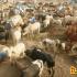 Balochistan Govt launches spray drive to prevent spread of Congo Virus