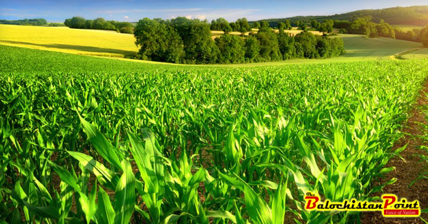 the recent increase in agricultural productivity Sustainable land intensification as ict in agriculture notes, increased land use to increase productivity will not be a feasible option for farmers, as this will bring on negative environmental and social costs, such as deforestation and loss of biodiversity.